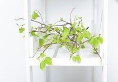 Κλάδοι με τα νέα φρέσκα πράσινα φύλλα άνοιξη Στοκ Εικόνες