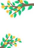 Κλάδοι με τα πράσινα φύλλα και τα κίτρινα λουλούδια Στοκ Φωτογραφίες