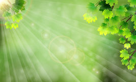 Κλάδοι με τα φύλλα, το έντονο φως και τις ακτίνες του ήλιου Στοκ εικόνα με δικαίωμα ελεύθερης χρήσης