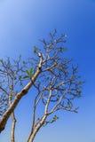 Κλάδοι με το μπλε ουρανό Στοκ φωτογραφίες με δικαίωμα ελεύθερης χρήσης