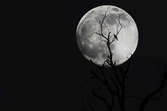 Κλάδοι με το φεγγάρι στοκ εικόνα