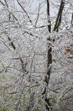 κλάδοι παγωμένοι Στοκ φωτογραφία με δικαίωμα ελεύθερης χρήσης