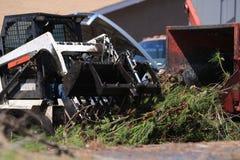 Κλάδοι πεύκων φόρτωσης Bobcat στο mulcher Στοκ εικόνα με δικαίωμα ελεύθερης χρήσης