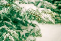 Κλάδοι που καλύπτονται κομψοί με την κινηματογράφηση σε πρώτο πλάνο χιονιού Στοκ φωτογραφίες με δικαίωμα ελεύθερης χρήσης