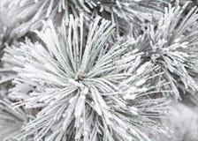 Κλάδοι που καλύπτονται κωνοφόροι με το hoarfrost Στοκ Εικόνα