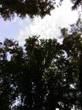 κλάδοι πράσινοι κανένας riverbank καλοκαίρι ουρανού Στοκ Εικόνα