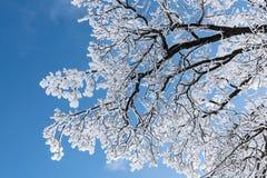 Κλάδοι σε ένα υπόβαθρο του μπλε ουρανού Στοκ Εικόνες