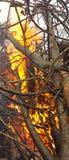 Κλάδοι στις φλόγες Στοκ Εικόνες