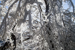 Κλάδοι στον πάγο Στοκ φωτογραφία με δικαίωμα ελεύθερης χρήσης