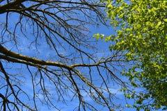 Κλάδοι συνεδρίασης από τα διαφορετικά δέντρα Στοκ Εικόνες