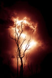Κλάδοι της πυρκαγιάς Στοκ εικόνα με δικαίωμα ελεύθερης χρήσης