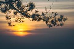 Κλάδοι της σκιαγραφίας δέντρων με την ανατολή Στοκ Εικόνες
