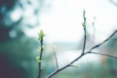 Κλάδοι της Apple στον κήπο Στοκ φωτογραφίες με δικαίωμα ελεύθερης χρήσης