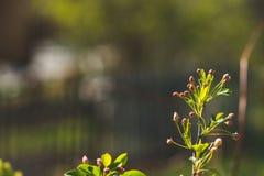 Κλάδοι της Apple στον κήπο Στοκ Φωτογραφίες