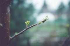 Κλάδοι της Apple στον κήπο Στοκ φωτογραφία με δικαίωμα ελεύθερης χρήσης