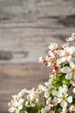 Κλάδοι του άσπρου ανθίζοντας δέντρου δαμάσκηνων Στοκ Φωτογραφία