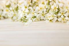 Κλάδοι του κερασιού πουλιών σε έναν ελαφρύ ξύλινο πίνακα σύνορα διάστημα αντιγράφων λεπτομερές ανασκόπηση floral διάνυσμα σχεδίων Στοκ εικόνες με δικαίωμα ελεύθερης χρήσης
