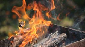 Κλάδοι του ξύλου κερασιών που συσσωρεύονται σε μια σχάρα που καίει τις φωτεινές κόκκινες φλόγες φιλμ μικρού μήκους