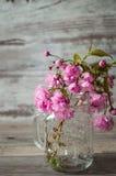 Κλάδοι του ρόδινου sakura ανθίσματος Στοκ Εικόνα