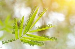 Κλάδοι του φύλλου μπαμπού ως έννοια χαρτών μυαλού Στοκ Φωτογραφίες