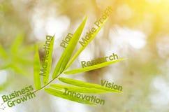Κλάδοι του φύλλου μπαμπού ως έννοια χαρτών μυαλού Στοκ φωτογραφία με δικαίωμα ελεύθερης χρήσης