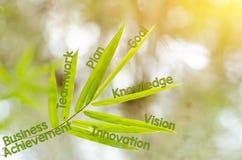 Κλάδοι του φύλλου μπαμπού ως έννοια χαρτών μυαλού Στοκ Εικόνες