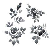 Κλάδοι τριαντάφυλλων Στοκ Εικόνες