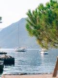 Κλάδοι των δέντρων πεύκων στο Μαυροβούνιο Στοκ Εικόνες