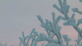 Κλάδοι των δέντρων που καλύπτονται με το χιόνι και με τον παγετό, ενάντια στο σκούρο μπλε ουρανό απόθεμα βίντεο