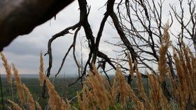 Κλάδοι των ξηρών νεκρών δέντρων Σφαιρική κλιματική αλλαγή Μια μυστηριώδης θέση Η κάμερα κινείται στον ολισθαίνοντα ρυθμιστή Ξηρά  απόθεμα βίντεο