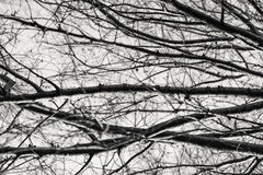 Κλάδοι χειμερινών δέντρων που περιγράφονται ενάντια στον ουρανό στοκ φωτογραφία