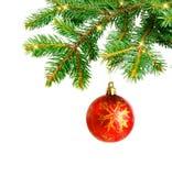 Κλάδοι χριστουγεννιάτικων δέντρων και κόκκινη σφαίρα Στοκ Εικόνες