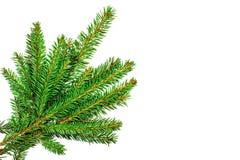 Κλάδοι χριστουγεννιάτικων δέντρων που απομονώνονται στο άσπρο υπόβαθρο Στοκ Φωτογραφία