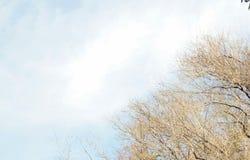 Κλάδοι χωρίς φύλλα με τον ουρανό Στοκ Εικόνες