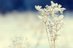 Κλάδοι χλόης που παγώνουν στον πάγο Παγωμένος κλάδος χλόης το χειμώνα καλυμμένο κλάδος χιόνι Στοκ Εικόνες