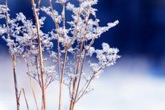 Κλάδοι χλόης που παγώνουν στον πάγο Παγωμένος κλάδος χλόης το χειμώνα καλυμμένο κλάδος χιόνι Στοκ φωτογραφίες με δικαίωμα ελεύθερης χρήσης
