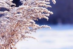 Κλάδοι χλόης που παγώνουν στον πάγο Παγωμένος κλάδος χλόης το χειμώνα καλυμμένο κλάδος χιόνι Στοκ φωτογραφία με δικαίωμα ελεύθερης χρήσης
