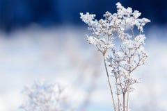 Κλάδοι χλόης που παγώνουν στον πάγο Παγωμένος κλάδος χλόης το χειμώνα καλυμμένο κλάδος χιόνι Στοκ Εικόνα
