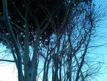 Κλάδοι στοκ φωτογραφία με δικαίωμα ελεύθερης χρήσης