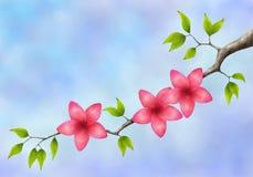 Κλάδος δέντρων με τα ρόδινα λουλούδια και τα πράσινα φύλλα Στοκ Φωτογραφίες