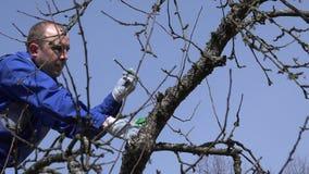 Κλάδος δέντρων μηλιάς δαμάσκηνων νεαρών άνδρων στο υπόβαθρο μπλε ουρανού 4K απόθεμα βίντεο