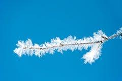 Παγετός πάχνης Στοκ Φωτογραφία