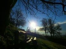 Κλάδος δέντρων που κρατά έναν ήλιο Στοκ εικόνα με δικαίωμα ελεύθερης χρήσης