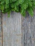 Κλάδος δέντρων στο αγροτικό ξύλινο υπόβαθρο Στοκ φωτογραφίες με δικαίωμα ελεύθερης χρήσης