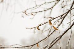 Κλάδος δέντρων στο hoarfrost Στοκ φωτογραφία με δικαίωμα ελεύθερης χρήσης