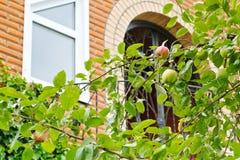Κλάδος δέντρων της Apple μπροστά από το νέο εξοχικό σπίτι Στοκ Εικόνες