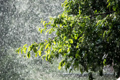Κλάδος δέντρων της Apple στη βροχή Στοκ φωτογραφίες με δικαίωμα ελεύθερης χρήσης