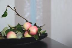 Κλάδος δέντρων της Apple στο μαύρο πιάτο στον πίνακα Στοκ εικόνες με δικαίωμα ελεύθερης χρήσης