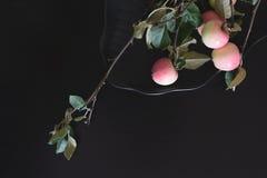 Κλάδος δέντρων της Apple στο μαύρο πιάτο στον πίνακα Στοκ Φωτογραφία