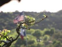 Κλάδος δέντρων του Τέξας Στοκ φωτογραφίες με δικαίωμα ελεύθερης χρήσης
